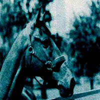 "MOTOR  ""Horse Trax"" (Top 40)"